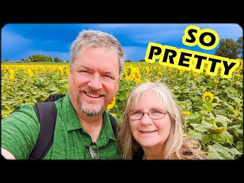 Michigan Day Trips - Amazing Sunflower Fields - Montague, Michigan - Traveling Michigan